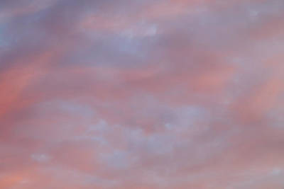 Photograph - Monday Skies - Rose by Nicholas Blackwell