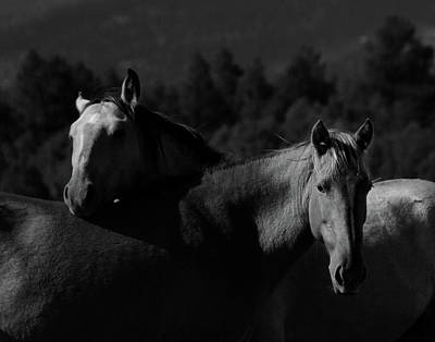 Photograph - Moneros by Catherine Sobredo
