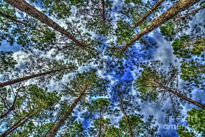 Photograph - Money Growing On Trees 2 Georgia Pine Tree Art by Reid Callaway