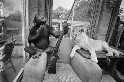 Indoors Photograph - Monkeying About by R Dumont