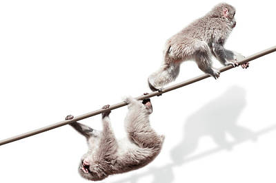 Trapped Photograph - Monkeys On The Rope by Kazunori Nagashima