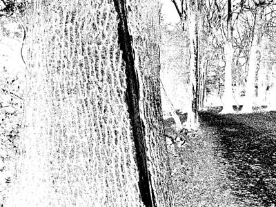 Photograph - Monochromatic Forest Trees In Highgate Woods 56 by Artist Dot