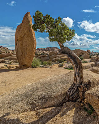Photograph - Monolith And Juniper II by Peter Tellone
