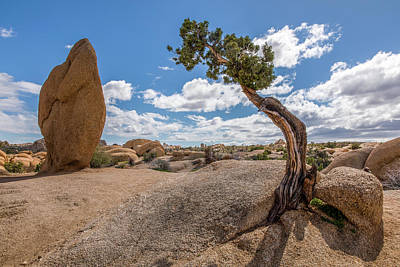 Photograph - Monolith And Juniper by Peter Tellone
