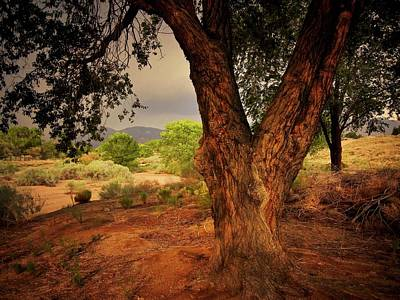 Photograph - Monsoon Light-east, Albuquerque, New Mexico by Flying Z Photography by Zayne Diamond