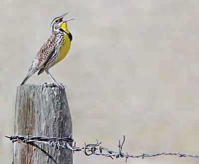 Meadowlark Wall Art - Photograph - Montana Meadowlark's Spring Song by Jennie Marie Schell
