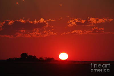 Garden Fruits - Montana sun going down by Jeff Swan