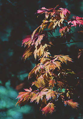 Photograph - Moody Autumn Leaves by Andrea Anderegg