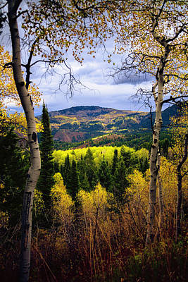 Aspen Wall Art - Photograph - Moody by Chad Dutson