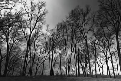 Photograph - Moodywood by Davin McLaird