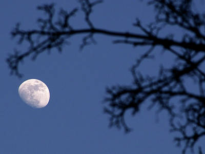 Branch Photograph - Moon And Branches by Christoph Hetzmannseder