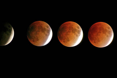 Photograph - Moon Eclipse by David Neil Madden