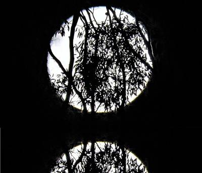 Photograph - Moon In Trees Reflection by Joan Stratton