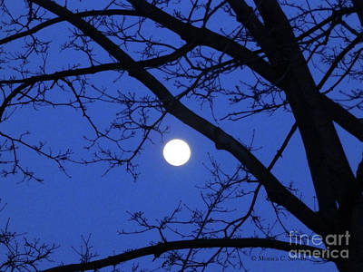 Photograph - Moonrise Through Maple Tree by Monica C Stovall