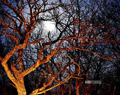 Photograph - Moonshine 3 by Susie Loechler