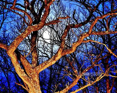 Photograph - Moonshine 4 by Susie Loechler