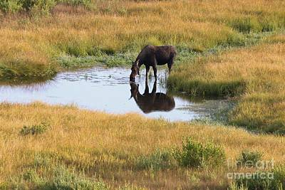 Wall Art - Photograph - Moose Reflection by Don Small Jr