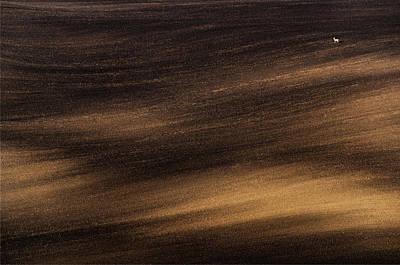 Photograph - Moravian Landscape With Roe Deer by Vlad Sokolovsky