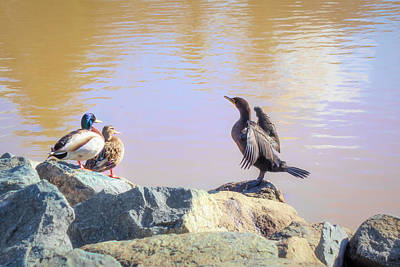 Photograph - Morning Chat II by Alison Frank