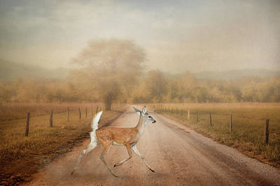 Photograph - Morning Crossing by Jai Johnson