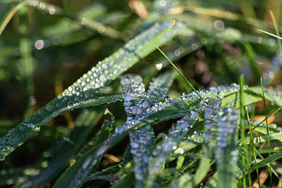 Photograph - Morning Dew On Grass by Scott Lyons