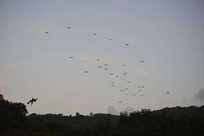Photograph - Morning Flock Rise by Climate Change VI - Sales