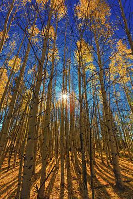 Photograph - Morning Glory by Rick Furmanek