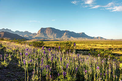 Photograph - Morning In Big Bend by David Morefield
