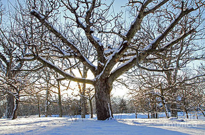 Photograph - Morning In Winter by Kevin McCarthy