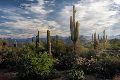 Photograph - Morning Light In The Sonoran  by Saija Lehtonen