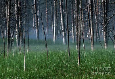Photograph - Morning Mist In Yellowstone by Sandra Bronstein