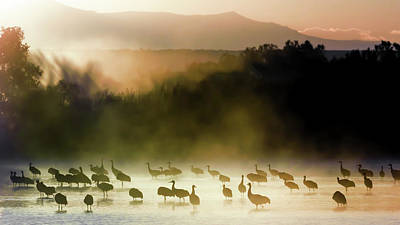 Photograph - Morning Mist, Morning Color by Van Sutherland