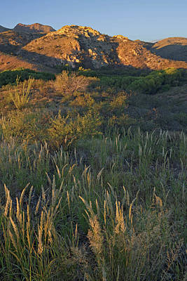 Photograph - Morning Muleshoe Grasses by Tom Daniel