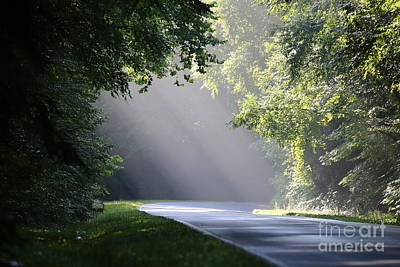 Wall Art - Photograph - Morning Rays by Don Small Jr