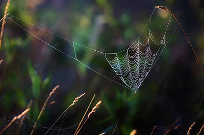 Photograph - Morning Spider by Bill Wakeley