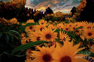 Photograph - Morning Sunflower Garden by Sherry Little Fawn Schuessler