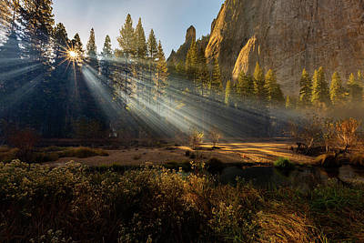 Photograph - Morning Sunlight Through Trees by Dixon Pictures