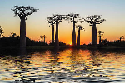 Morondava, Baobab Alley Art Print by Gabrielle Therin-weise