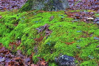 Photograph - Moss And Leaves Ground Cover by Lisa Wooten
