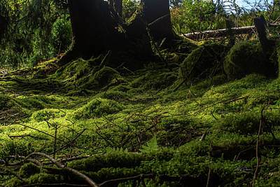 Photograph - Moss Carpet by Bill Posner