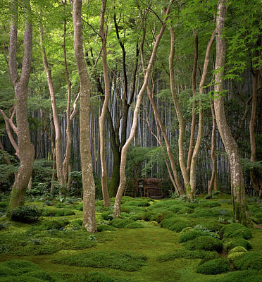 Photograph - Moss Garden At Gioji Temple by Photo By Benjy Meyers