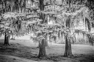 Photograph - Moss Laden Trees 4132 by Donald Brown