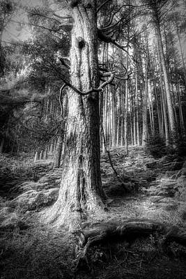 Photograph - Mossy Forest Black And White by Debra and Dave Vanderlaan