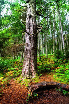 Photograph - Mossy Forest by Debra and Dave Vanderlaan