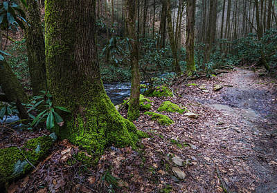 Photograph - Mossy Forest Trail by Keith Smith