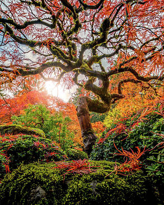 Photograph - Mossy Maple Tree by George Shubin