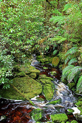 Photograph - Mossy Mountain Stream by Nareeta Martin