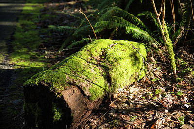Photograph - Mossy Rotting Log by Tom Cochran