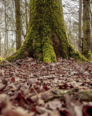 Photograph - Mossy Tree by Scott Lyons