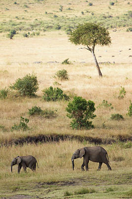 Animal Family Photograph - Mother And Baby Elephant In Savanna by Universal Stopping Point Photography